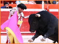 Cozumel bullfighting