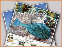 Cozumel calendar 2011