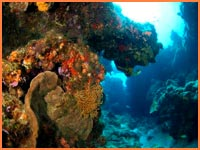 Cozumel Marine Park