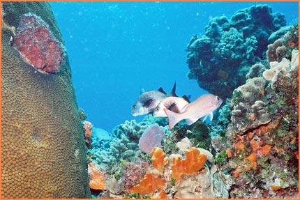 Cozumel snorkling tour