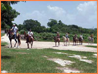Cozumel horseback tour.