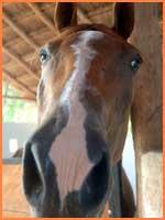 Cozumel horses