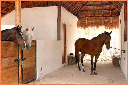 Cozumel stables