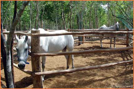 Cozumel equestrian center