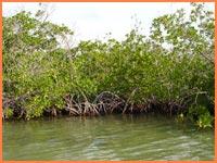 Cozumel Ramsar site