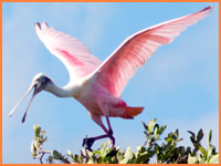 Cozumel birdwatching tour