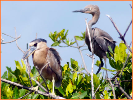 Cozumel bird tour.