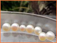 Cozumel pearl farm