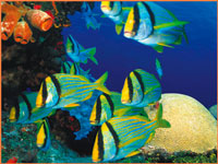 Cozumel snorkel tours
