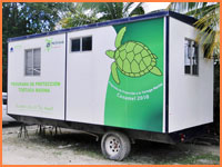 Cozumel turtle office