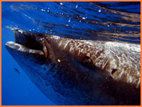 Whale shark tours from Cozumel