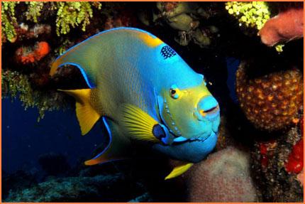 Cozumel underwater life