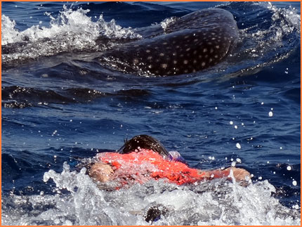 Whale shark tour from Cozumel Mexico