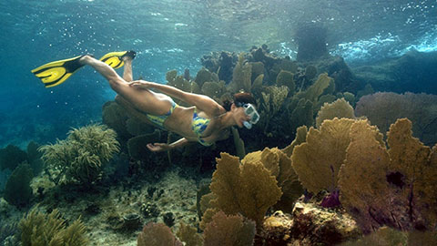 300 species of colorful fish and over 100 types of beautiful coral in Cozumel