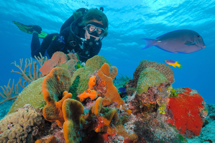 Boat dive for beginners this is cozumel - Cozumel dive packages ...