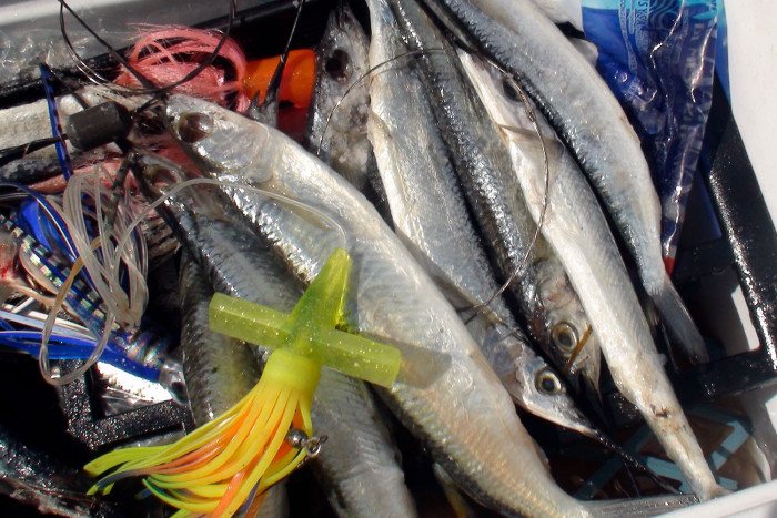 Cozumel fishing charters this is cozumel for Cozumel fishing charters