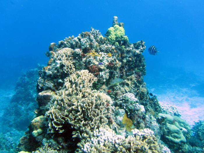 Two reefs